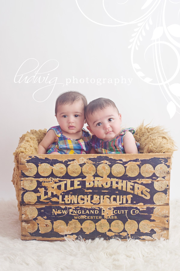 6 month twins photography